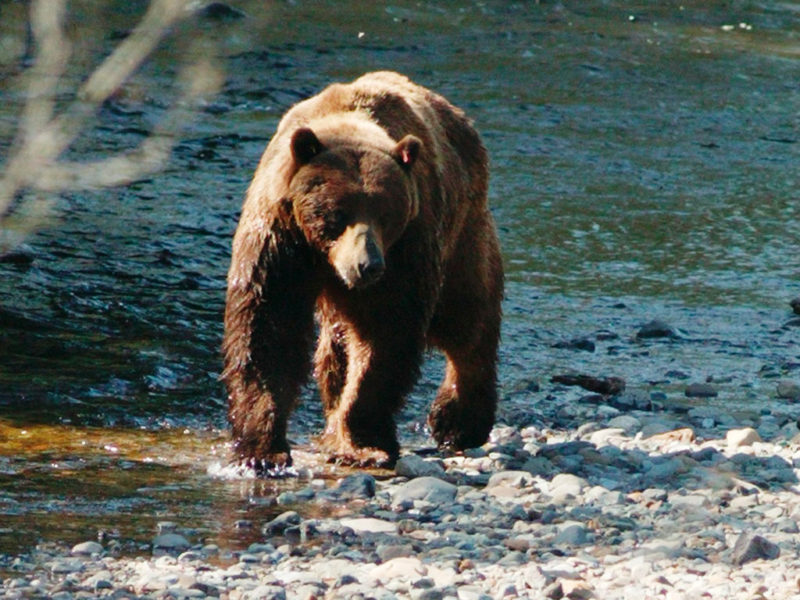 Celebrity Cruises bear water